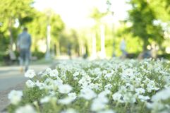 Magnitogorsk Ryssland sommar Tid parkerar blommaskymning fotografering för bildbyråer