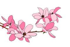 magnolia απεικόνισης άνθισης Στοκ εικόνες με δικαίωμα ελεύθερης χρήσης