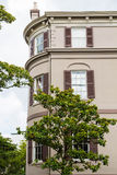 Magnolia από το παλαιό καφετί κτήριο ασβεστοκονιάματος Στοκ φωτογραφία με δικαίωμα ελεύθερης χρήσης