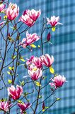 Magnolia και το WTC Στοκ φωτογραφία με δικαίωμα ελεύθερης χρήσης
