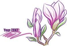 magnolia κλάδων απεικόνιση αποθεμάτων