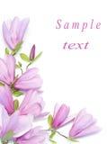 magnolia τομέων συνόρων στοκ φωτογραφίες