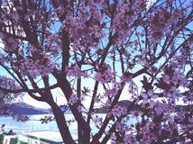 magnolia fotografia stock libera da diritti