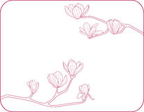 Magnolia. Vector illustration of a blooming magnolia Royalty Free Stock Photography