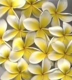 magnolia стоковые фотографии rf