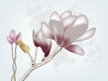 Magnolia. Beautiful magnolia postcard painted with different styles Stock Photography