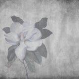 Magnolia Royaltyfria Foton