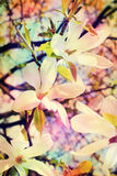 Magnolia art background Stock Photography
