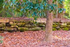 Magnolia in autumn park Stock Photo