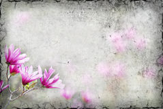 Magnolia Background Royalty Free Stock Images