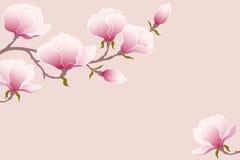 Magnolia blanda Imagen de archivo libre de regalías