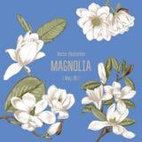 Magnolia Blommor Vektorillustrationen i tappning utformar kortet blommar hälsning bostonian blommas trees vektor illustrationer
