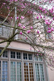 Magnolia blooms in the Garden District. A magnolia tree blooms outside of a mansion in the Garden District of New Orleans, Louisiana royalty free stock photography
