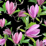 Magnolia blooms.Seamless pattern. With pink flowers, green leaves, branches on black background.Floral spring print.Botanical vector illustration Royalty Free Stock Image