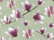 Magnolia blossom seamless pattern . royalty free illustration