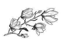 Free Magnolia Branch Engraving Vector Illustration Royalty Free Stock Photos - 122255398