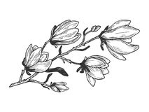 Magnolia branch engraving vector illustration. Scratch board style imitation. Hand drawn image stock illustration