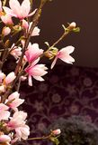 Magnolia Branch in Fancy Room Royalty Free Stock Image