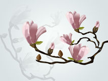 Magnolia branch . Magnolia branch  with reflection Royalty Free Stock Images