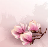 Magnolia branch watercolor illustration. Magnolia branch on grunge background Royalty Free Stock Photography