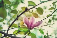 Magnolia bud Stock Images