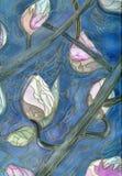 Magnolia buds Stock Photos
