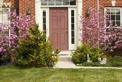 Magnolia Bushe à l'entrée à une maison suburbaine image stock