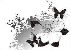 Magnolia and butterfly. A background in black and white with a magnolia and butterflies Royalty Free Stock Photography