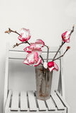 Magnolia on a chair Royalty Free Stock Image