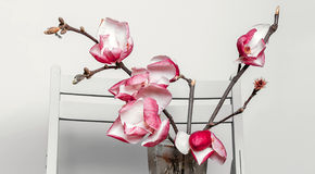 Magnolia on a chair Royalty Free Stock Photo