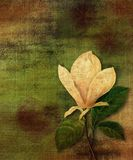 Magnolia de cru Photographie stock libre de droits
