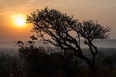 Magnolia de la mañana Imágenes de archivo libres de regalías