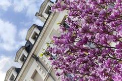Magnolia in de Stad stock foto's