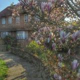 Magnolia della primavera a casa Fotografie Stock Libere da Diritti