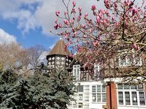 Magnolia die in de lente bloeien stock afbeeldingen