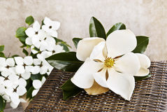 Magnolia And Dogwood Still life Royalty Free Stock Photography