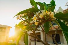 Magnolia en luz del sol Fotos de archivo libres de regalías