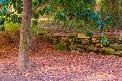 Magnolia en parc d'automne Images libres de droits