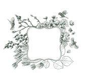 Magnolia för fåglar för fåglar för ramvektorbakgrund victorian royaltyfri illustrationer