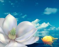 Magnolia & Fish Royalty Free Stock Images