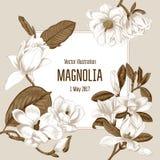 Magnolia Fleurs Illustration de vecteur dans le type de cru Carte de voeux avec des fleurs botanique Arbres de floraison illustration stock