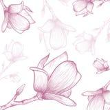 Magnolia Flower Background Royalty Free Stock Image