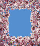 Magnolia Flower Border Frame Royalty Free Stock Photography