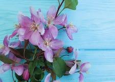 Magnolia flower decorative romantic springtime on a wooden background stock illustration