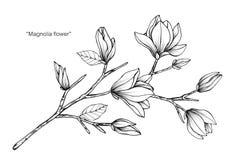 Magnolia flower drawing illustration black and white with line art magnolia flower drawing illustration black and white with line art royalty free stock photos mightylinksfo