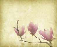 Magnolia flower with Old antique vintage paper Stock Images