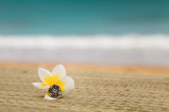 Magnolia flower with ring on seacoast. Background Stock Images