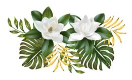 Magnolia flower white color beautiful nature. Vector royalty free illustration
