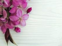 Magnolia flower decorative natural vintage springtime on a wooden background stock photos