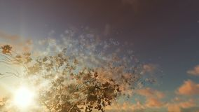 Magnolia flowers against beautiful sunset, particles flying. Hd video stock video footage